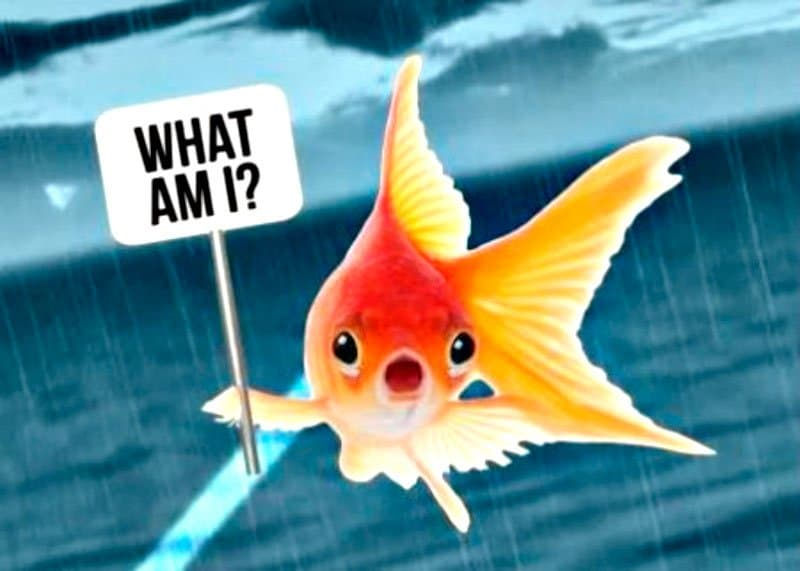 Рыбное мошенничество фото
