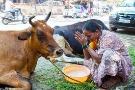 Вегетарианство в Индии фото