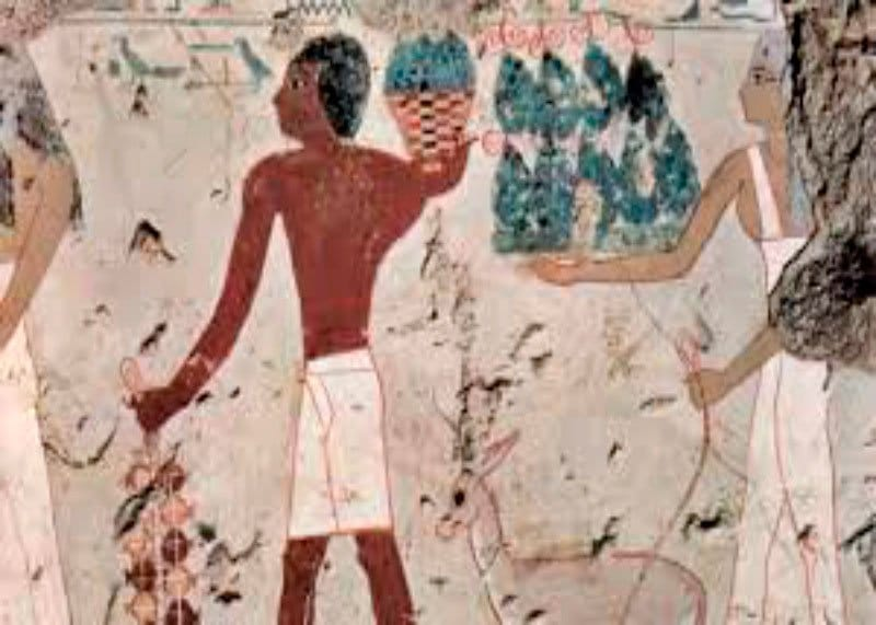 Как делали вино в Египте фото