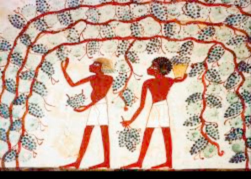 Вино в Египте фото