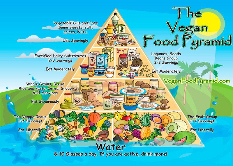 Веганская пищевая пирамида фото