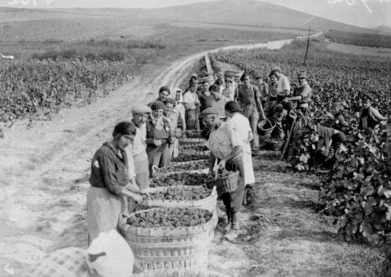 Виноградники Шампани фото