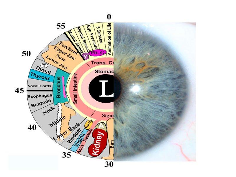 Глаза и здоровье фото