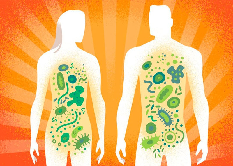 Бактерии в организме фото