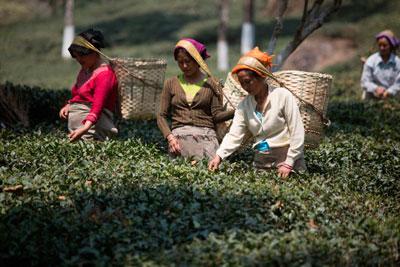 Чай Таиланд фото