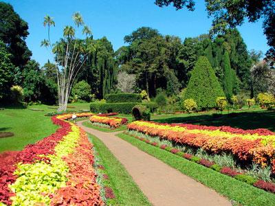 Ботанический сад Перадения фото