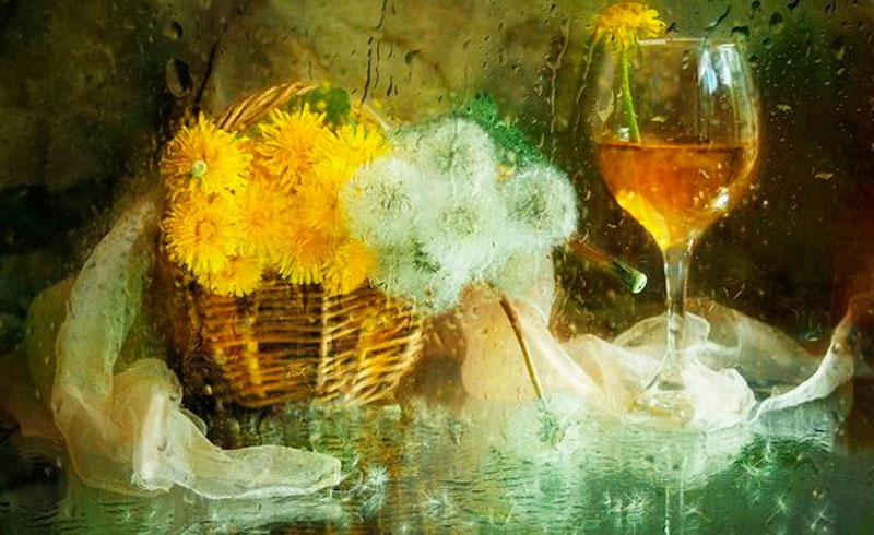 Вино из одуванчиков картина фото