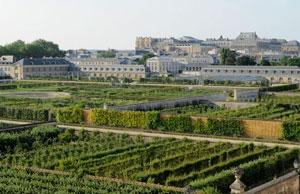 Версаль огород фото