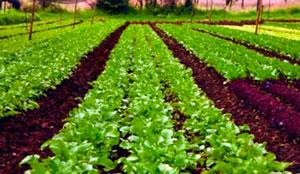Органическое сельское хозяйство фото