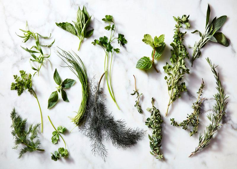 Травы в кулинарии фото