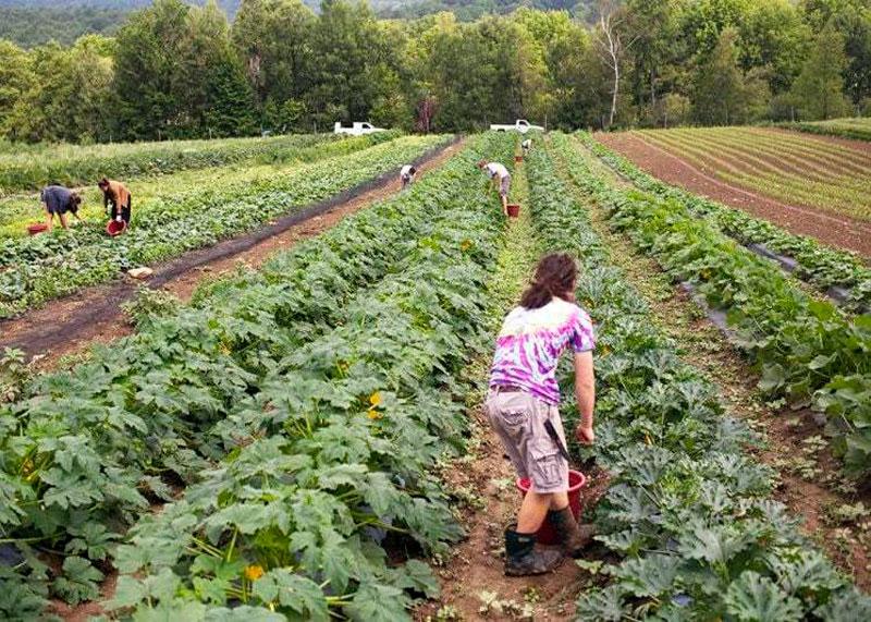 Органическая ферма фото