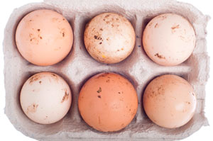 Домашние яйца фото
