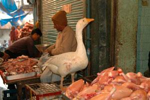 Куриные грудки отравление фото