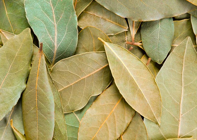 Сушеный лавровый лист фото