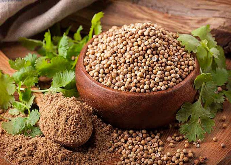Семена кориандра молотый кориандр фото
