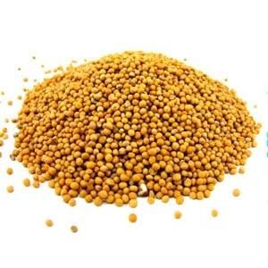 Белые семена горчицы фото