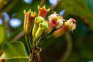 Цветы гвоздики фото