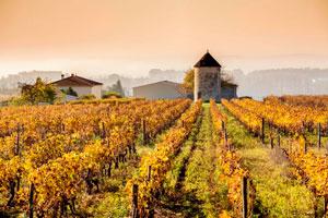 Виноградники Франция фото