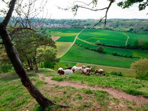 Швабия фото