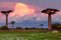 Мадагаскар фото