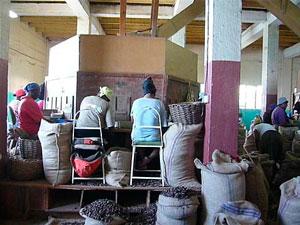 Фабрика мускатный орех фото