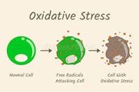 Оксидативный стресс фото