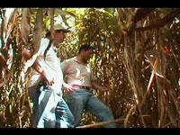 Плантация кардамон Гватемала фото