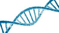 ДНК фото