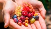 Разные ягоды фото