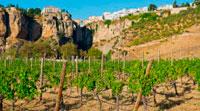 Андалузия виноградники фото