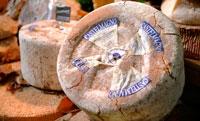 Сыр кастельяно фото