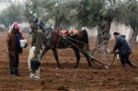 Левантийские крестьяне фото