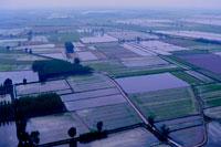 Рисовые поля Ломбардия фото