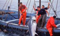 Рыбаки Средиземноморья фото