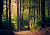 Тайские леса фото