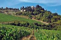 Виноградники Кьянти фото