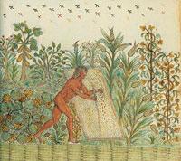 Посев кукурузы фото