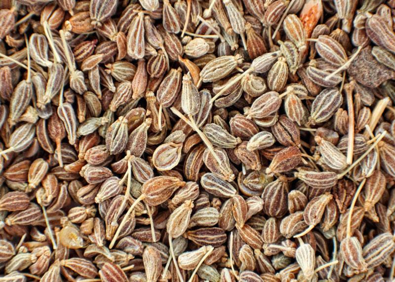 Семена аниса фото
