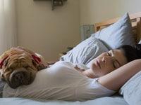 Сон фото