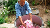 Камшар розовая вода фото