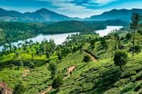 Керала Индия фото