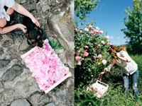 Эмико собирает розы фото
