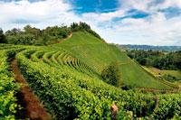 Виноградники Пьемонт фото